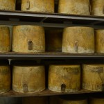Sleeping Cheese 2 (1024x681)