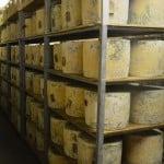 Sleeping Cheese 4 (1024x897)