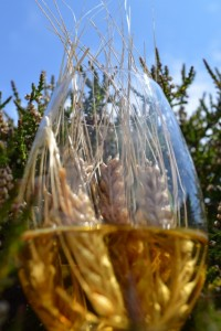 Barley in glass & Heather (426x640)