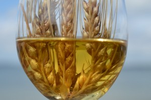 WCI barley in glass (640x426)