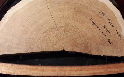 SCOTCH SERIES 38  Oak